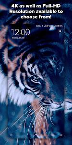 Download 4K Wallpapers - Auto Wallpaper Changer 1.1.2.1 APK