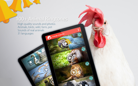 Download Animals: Ringtones 3.0 APK