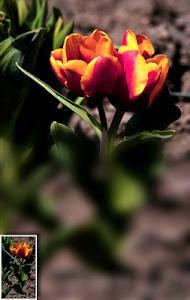 Download Blur Background DSLR 2.1.5 APK