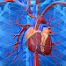 Download Cardiovascular System 1.0 APK