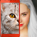 Download Kittens: what cat are you? 2.11 APK