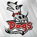 Download Dogs Bar 1.0.1 APK