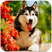 Download Dog Puzzle 1.11 APK