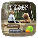 Download (FREE) GO SMS PRO TEDDY THEME 3.3.1 APK