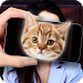 Download Face Scanner Cats Simulator 1.0.3 APK