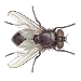 Download Fly 1.30 APK