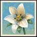 Download Inner Garden 2.23 APK