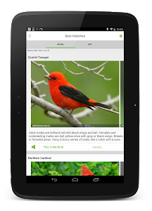 Download Merlin Bird ID by Cornell Lab of Ornithology  APK