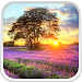 Download Perfect Sunset Live Wallpaper 5.0 APK