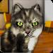 Download Talking Cat Funny 1.93 APK