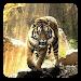Download Tigers Live Wallpaper 8.1 APK