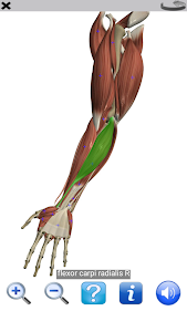 screenshot of Visual Anatomy Free version Varies with device