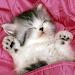 Download cute cat wallpapers 10.02 APK