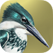 Download iBird Lite Free Guide to Birds 7.6.827 APK
